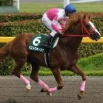 [競馬予想] 2016年最初のG1・フェブラリーSは、好調騎手のこの馬!
