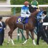 [競馬予想] スプリングS・阪神大賞典ともに1番人気を外してみた