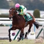 [競馬予想] 神戸新聞杯・オールカマーともに1番人気が答えを出す!